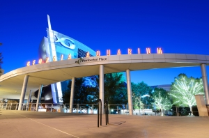 The Georgia Aquarium in Atlanta, GA. Just one of the many exciting adventures awaiting you at the 2014 National Convention!