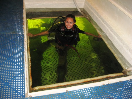 Jessica Fain (Epsilon Xi Chapter '11) Diving